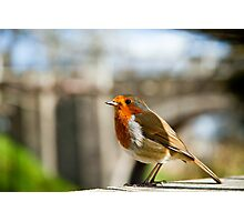 City Robin Photographic Print