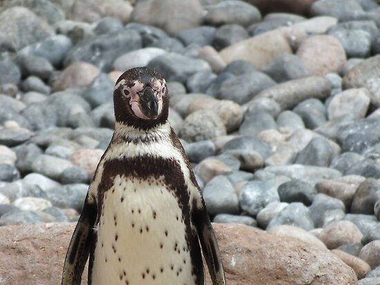 Penguin by Kelsey Leigh Hayes