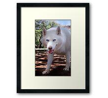 I don't recognize my dog park anymore Framed Print