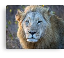 Early Morning Stare Of Hunger Canvas Print