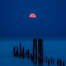 Moon by Jarede Schmetterer