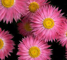 Pink Wheels by Paul Earl