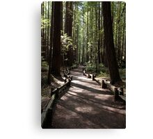 Armstrong Redwoods Canvas Print