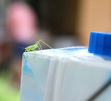 Grasshopper on Milk Carton by Jennifer Heseltine