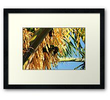 Lorikeets and Palm Blossoms 2 Framed Print