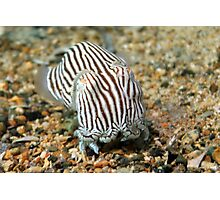 Striped Pyjama Squid Photographic Print