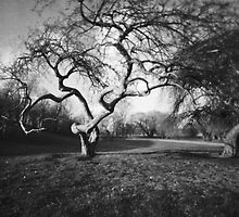 Gnarly Old Tree in Spring : Pinhole Study by Max Buchheit