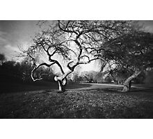 Gnarly Old Tree in Spring : Pinhole Study Photographic Print