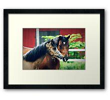 28.6.2013: Ponies Framed Print