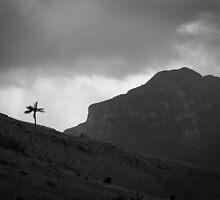 Mount Lidgbird by Claire Walsh