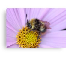 Bumble Bee Macro Canvas Print