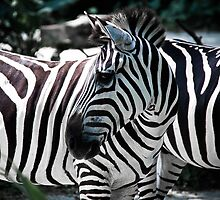 Lost In Stripes by KerryPurnell