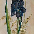 Iris by Sue Anderson
