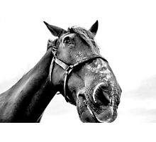 A Gentle Giant Photographic Print