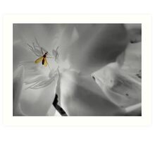 Mosquito - insect Art Print