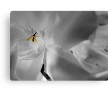 Mosquito - insect Canvas Print
