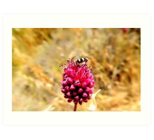 insect with flower Art Print