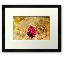 insect with flower Framed Print