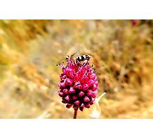 insect with flower Photographic Print