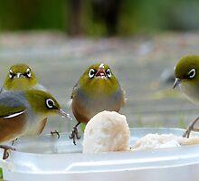 YUM...yum...Yummy... - Silver-Eyes - NZ by AndreaEL