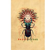 sun-beetle 1 Photographic Print