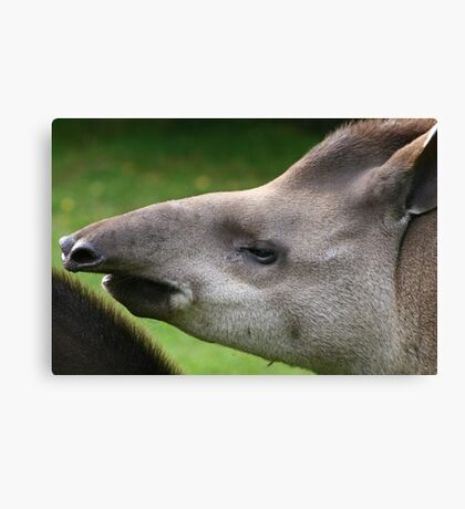 Sniffing the air Canvas Print