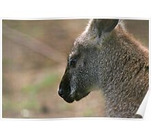 Wallaby II Poster
