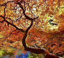 Serenity by Sue Morgan