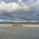 Rhinos at Lake Nakuru by godtomanydevils