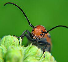 """Don't Bug Me"" by Gail Jones"