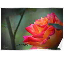 Rose Vintage Poster