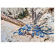 Tribal Mussels Photographic Print