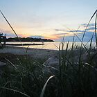 Behind the Beach Grass by Anna Hassett