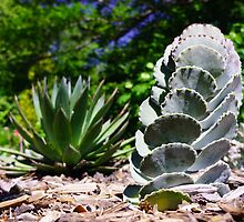 Cactus & Cactus by Jon Unsell
