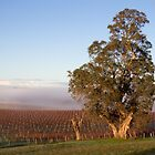 ~ Winter Vineyard ~ by LeeoPhotography