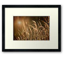 Golden Morning at Laratinga Framed Print