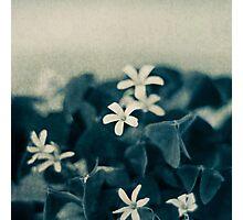 Pretty in Blue Photographic Print