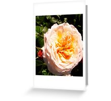 Governor General's Roses  7 Greeting Card
