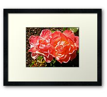 Governor General's Roses 8 Framed Print