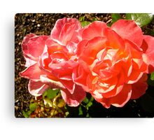 Governor General's Roses 8 Canvas Print