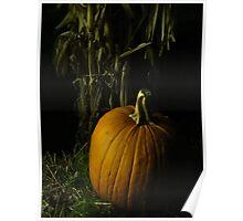 Pumpkin Pumpkin Big And Round Poster
