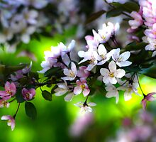 Full Bloom by Ljartdesigns