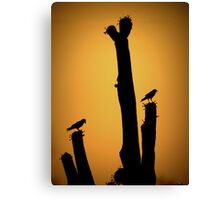 Saguaro Snack at Sunset Silhoutte Canvas Print