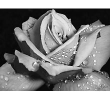 """""""Rose Without Color"""" Photographic Print"""