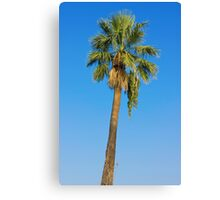 Palm Tree Over Clear Blue Sky Canvas Print