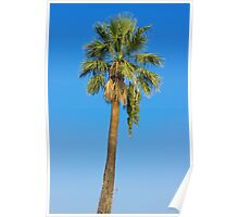 Palm Tree Over Clear Blue Sky Poster