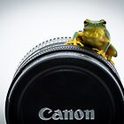 Canon Frog by Donna Rondeau