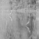 BigBird B&W Abstract by Adam Kuehl