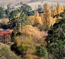 The Water Tower - Bushy Park, Tasmania by clickedbynic