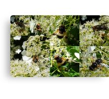 Midsummer Feast for Insects Canvas Print